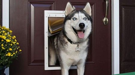 Dog Door Installers in Bordeaux, TN